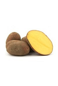 Kartoffeln Laura rot