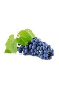 Trauben blau aus dem Thurgau